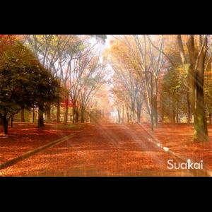 tienda-cuadro-4-suakai